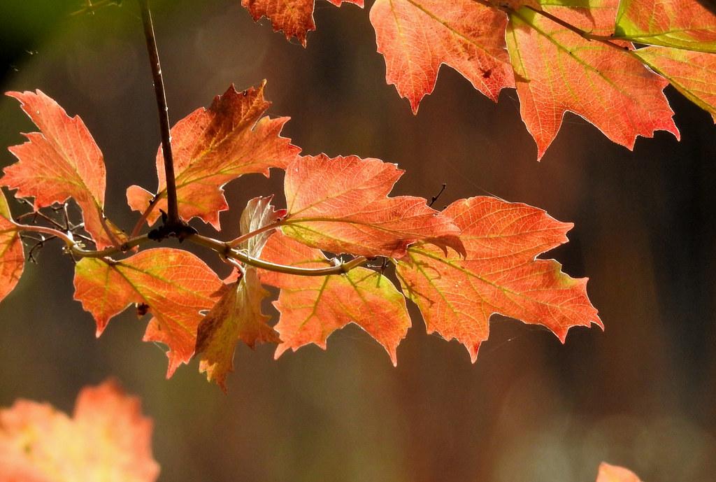 Herbst..feuer