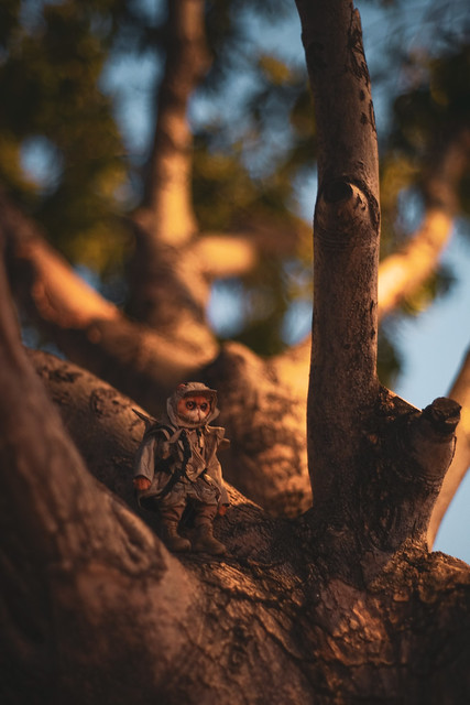Tree Climber (Explored)