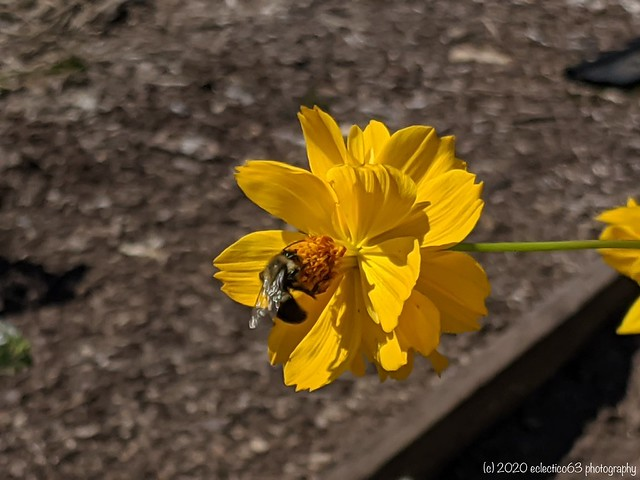 the bees are back in town...spread the word around