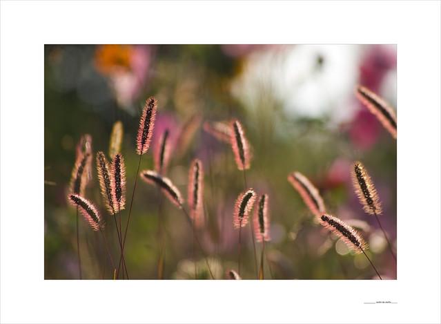 Jardín de otoño