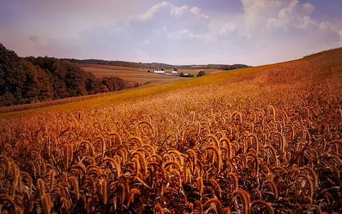 farm field sky clouds trees landscape beauty light