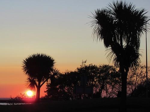 gwuk a47 runhamroad chusan palms palmtrees trees sunset sky breydonwater greatyarmouth yarmouth norfolk thebroads norfolkbroads silhouettes sun