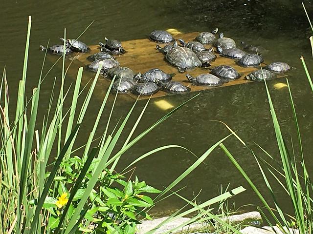 Turtles galore
