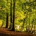 Trees in Raith Estate, Kirkcaldy by Briantc