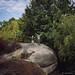 Eridge Rock. Kent