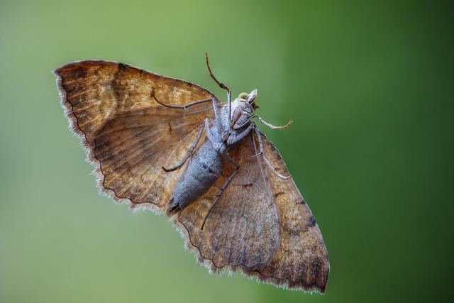 Under the wings - Unter den Flügeln
