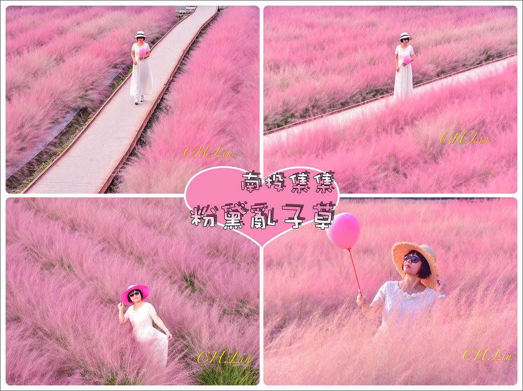 集集粉黛亂子草_200926_0-tile
