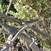 Blackpoll Warbler at Hayward Shoreline
