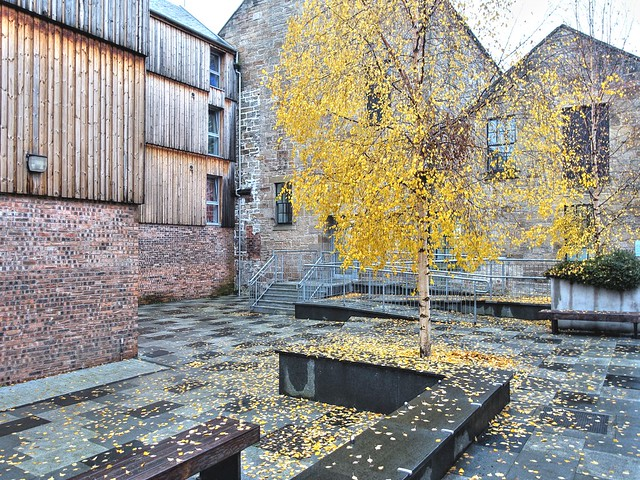 Autumn tree in Edinburgh