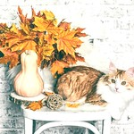 Autumn still life)))... :cat::fallen_leaf: