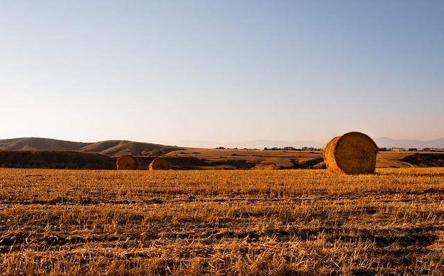 Warm haystacks