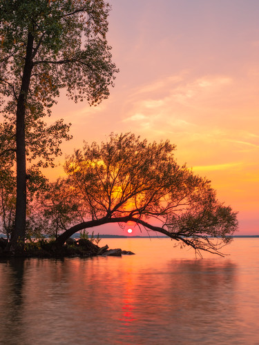 sunset tree nature water madison lakemendota tenneypark vertical nopeople background wallpaper canoneos5dmarkiv canonef2470mmf28lusm midwest fall autumn