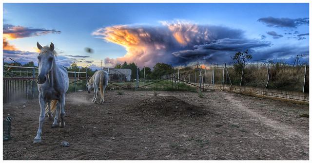 «Los caballos hacen el paisaje más hermoso».