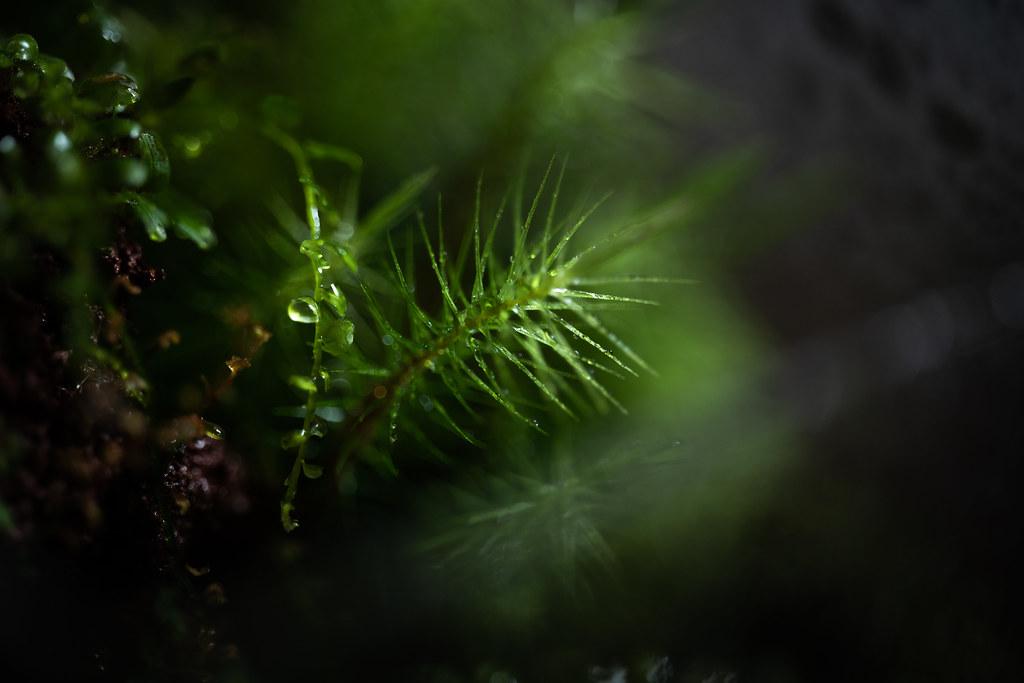 Moss Art Terrarium 02