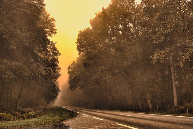 Route en forêt.