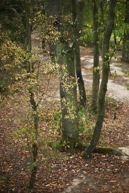 early autumn @ walking path 3