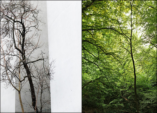 trees' habitats (Ute Kluge / Manfred Geyer)