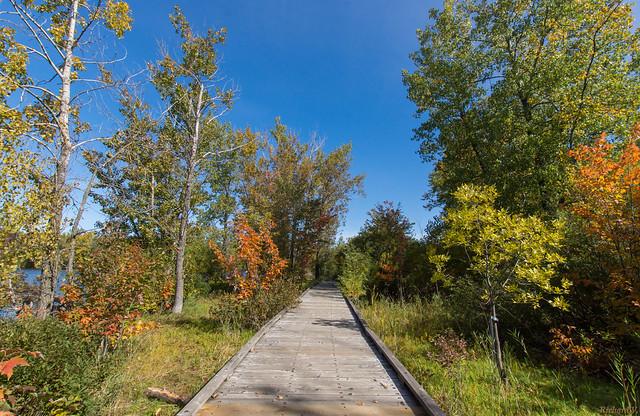 Automne, autumn - Base de Plein Air de Ste-Foy - Québec, Canada - 9411