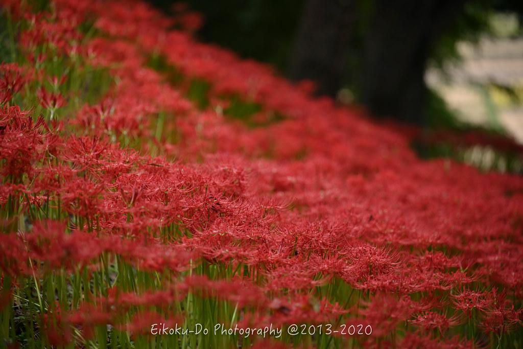 EKD_0949