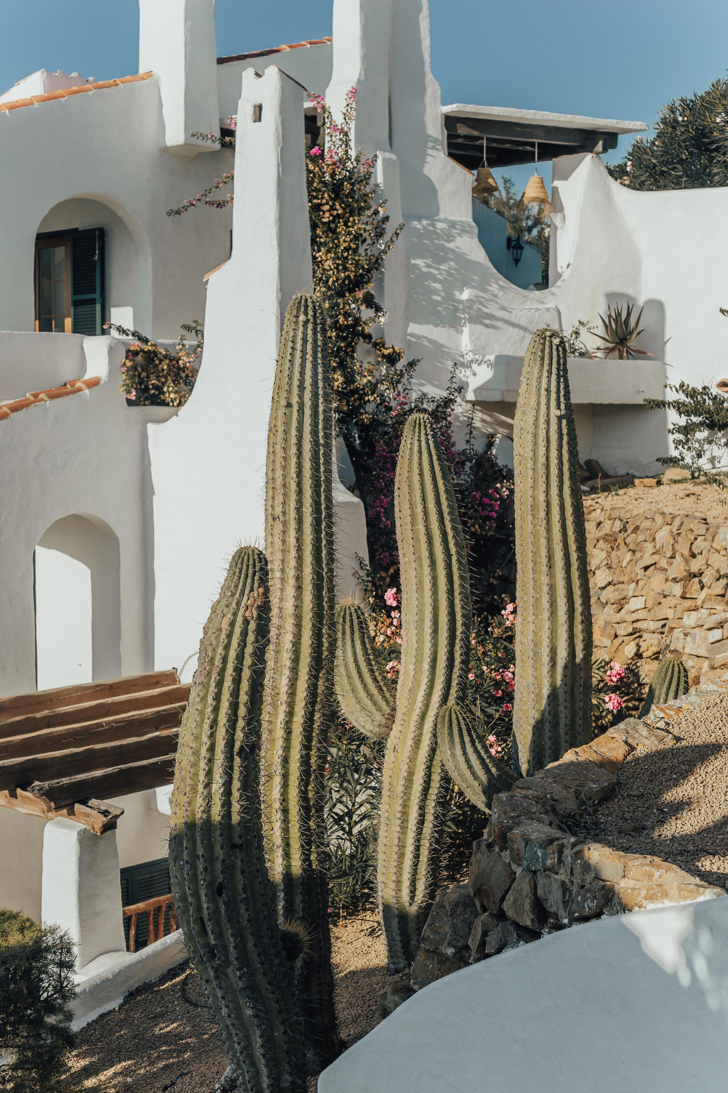 cactus-esfornells_menorca