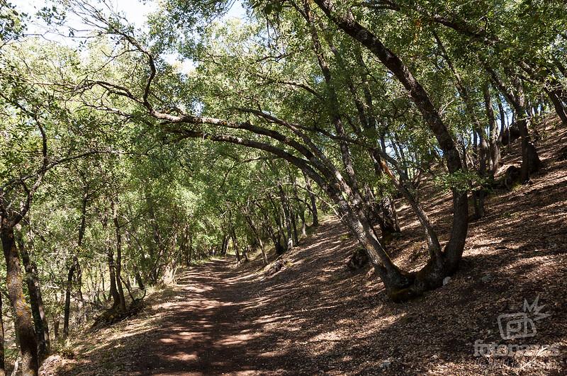 Bosque de Valdenazar