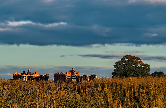 Fall Harvest , Amish Country