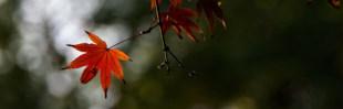 Arco-Íris Reloaded: Cheirinho a outono