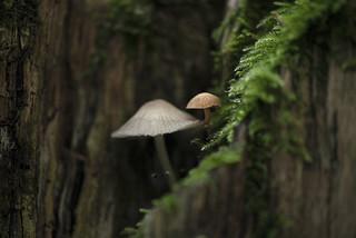 Mushrooms microcosmos