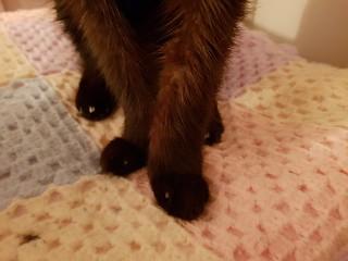 Dim Sim's feets