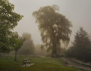 Edwards Gardens in the fog