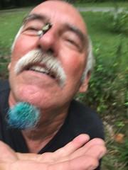 Giant Swallowtail on Ron's Nose