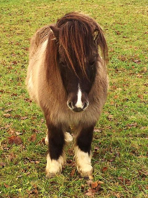 Ponys auf der Weide und Pferde im Stall ,serie, 76920/12995
