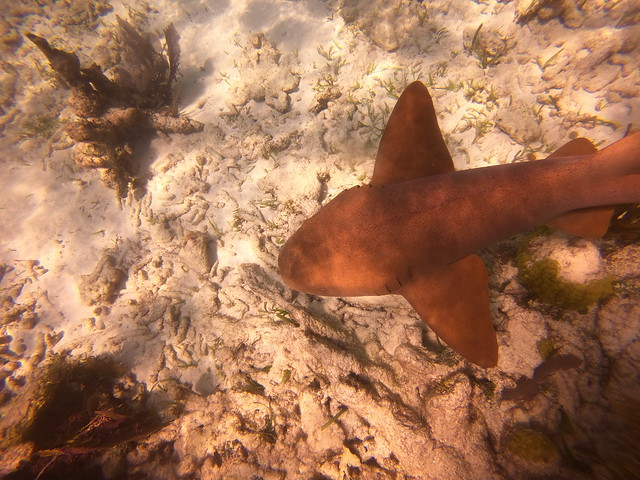 Scuba Dive Report AM September 29 2020
