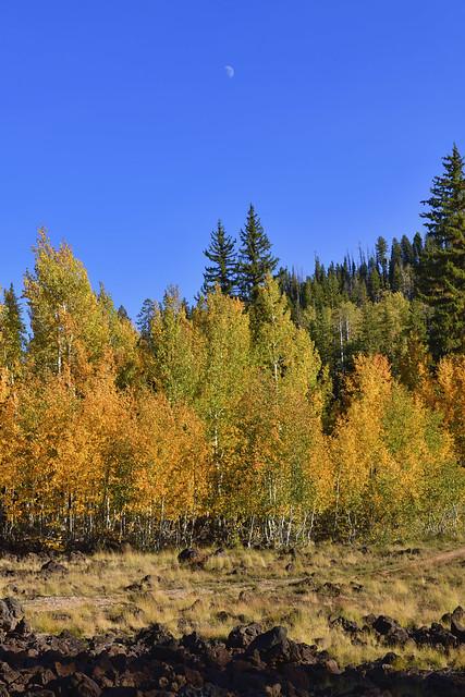 Autumn Colors - Moon - 92420--850_2084_7961