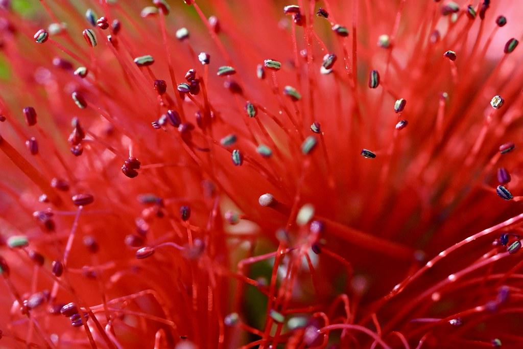 Coogee NSW AUSTRALIA