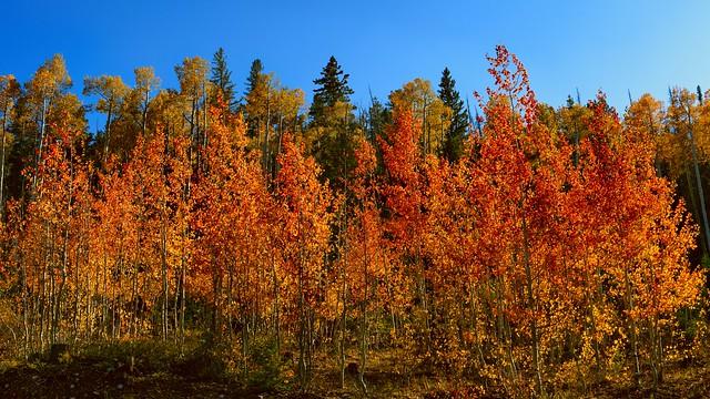 Autumn Colors - 92420--850_1937_7814