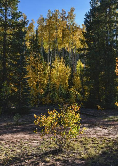 Autumn Colors - 92420--850_1976_7853