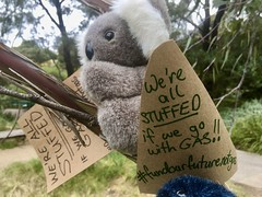 This koala is stuffed, and we will all be stuffed if a Covid gas led recovery. September 25 Global climate strike in Melbourne under pandemic lockdown.  #myMoreland #fundourfuturenotgas