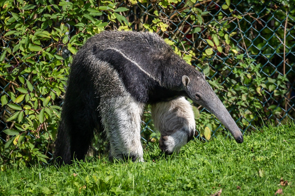 200925-Chester_Zoo-4177