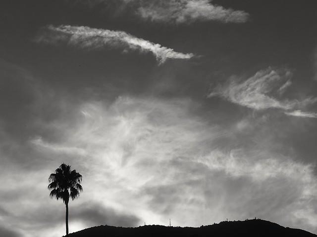 Le palmier the palmtree