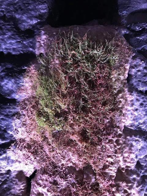 Moss growing inside the Brockville Railway Tunnel