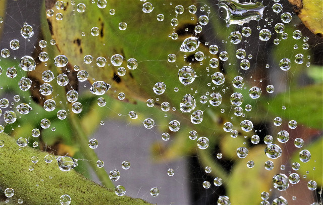 Raindrops on the Web