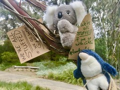 Koala and penguin up a tree say we are all stuffed if we go with gas. September 25 Global climate strike in Melbourne under pandemic lockdown.  #myMoreland #fundourfuturenotgas