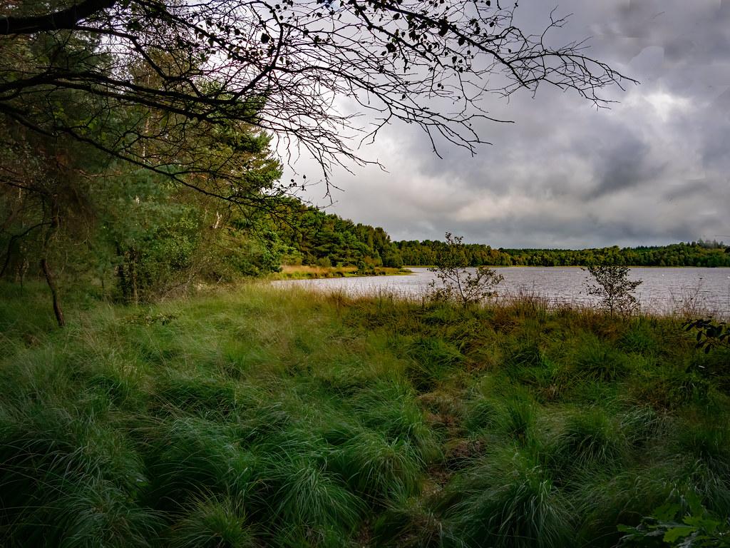 Sur les rives de l'étang de Paimpont... 50389605608_30be58c7bc_b