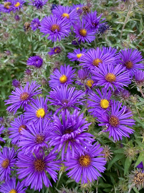 Dream Purple