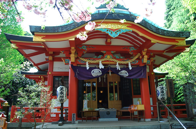 Japanese shrine with cherry blossoms