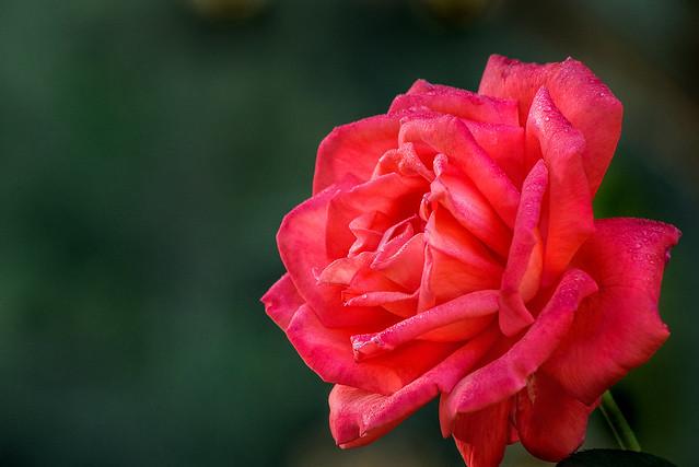 An Outstanding Brookside Rose 3-0 F LR 9-20-20 J092