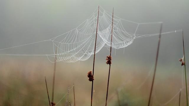 Spider top architecture