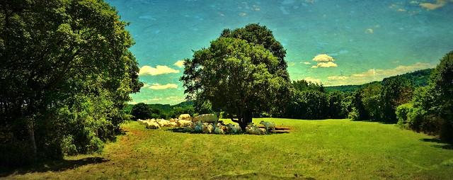 Heidelandschaft bei Aidlingen, Kuhherde unter Baum, 12999