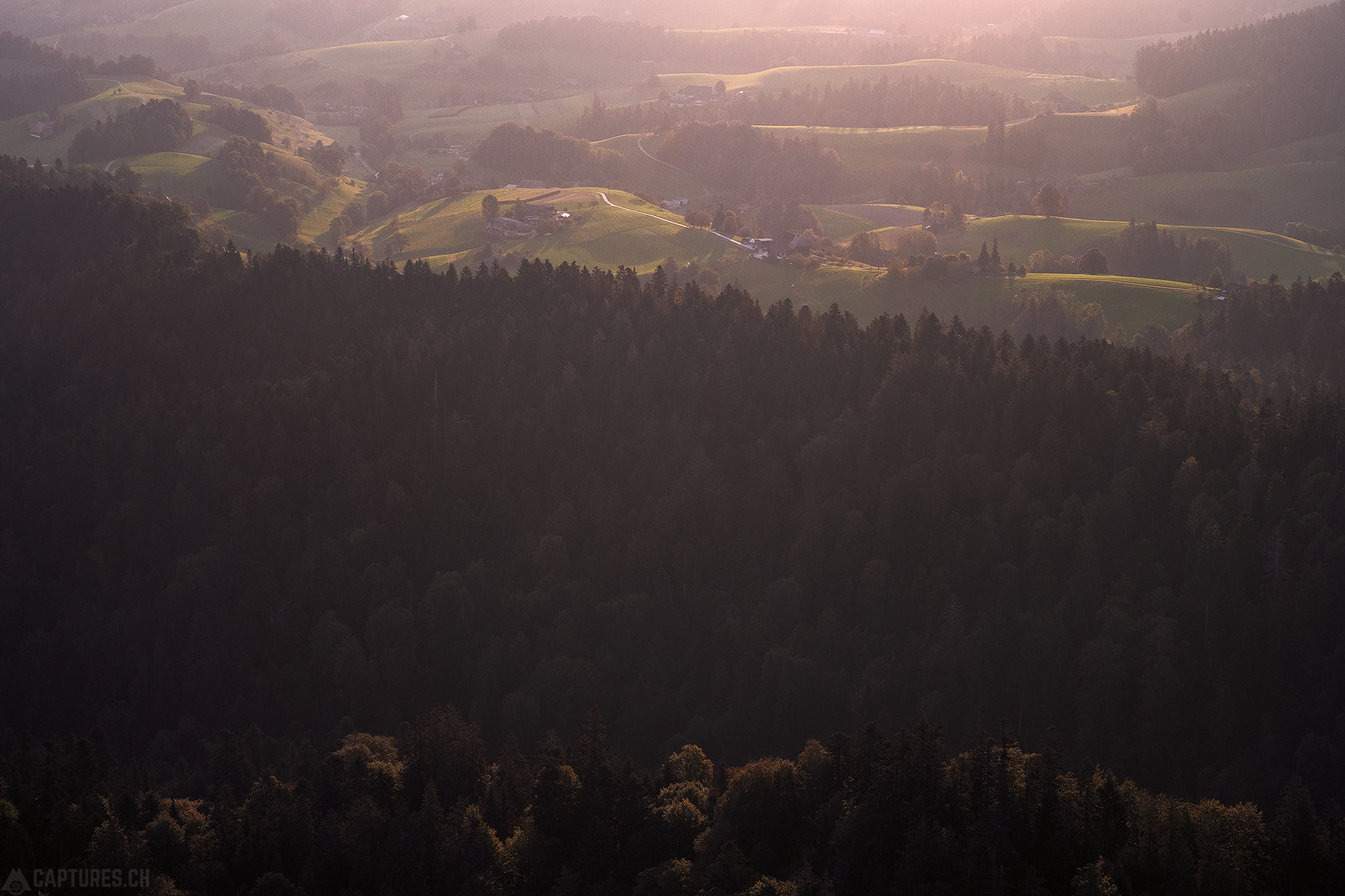 Forest - Sumiswald